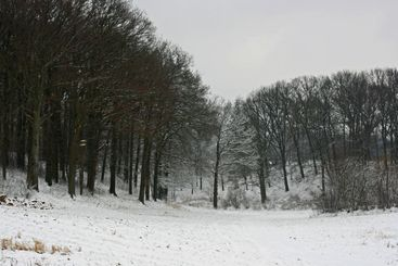 Tree branches in winter