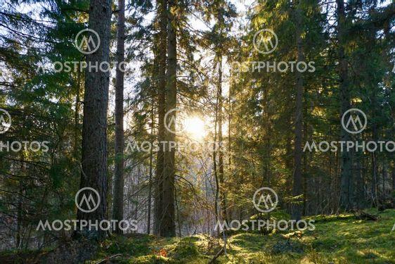 Skogen visar sina framfötter