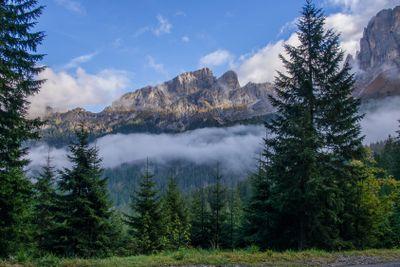 Blick durch Bäume auf Berge