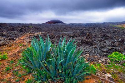 spain,canary islands,lanzarote : agave
