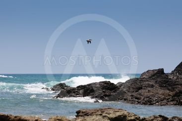 Pelican Over the Pacific