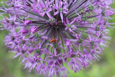 macro, flower bows, beetles