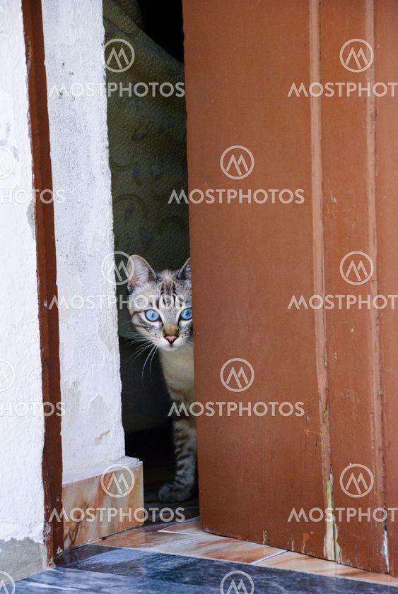 Indenlandske kat på Deller