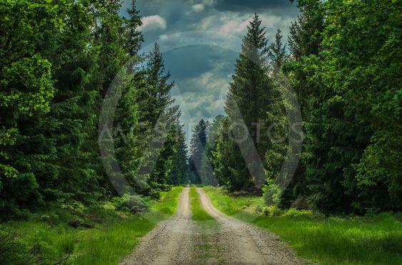 En lång skogspromenad