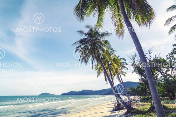 Coconut palm trees sandy tropical beach on a background