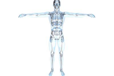 Anatomy - X-Ray