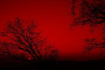 Trees Silhouetted On A Red Sunset