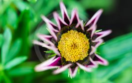 Beautiful flower head close up