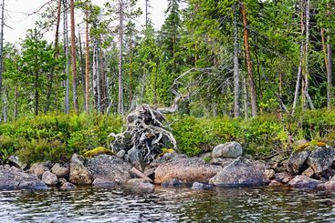wild forest, stones and cold water