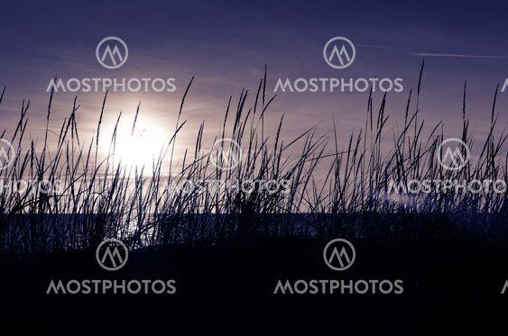 Solen lyser genom vassen vid stranden en höstkväll