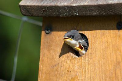 Baby Birds in Birdhouse
