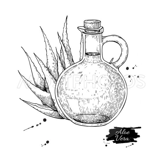 Aloe Vera juice in pitcher bottle. Hand drawn vector...