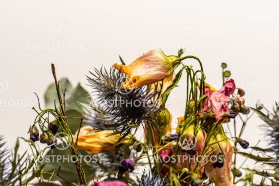 Colorful bouquet of dried flowers.