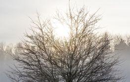 Snow fog of Swedish forest