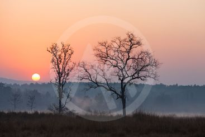 Sunrise at Kanha National Park, India
