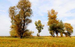 Nature Altaya