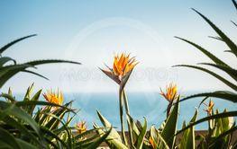 A couple of strelizia flowers