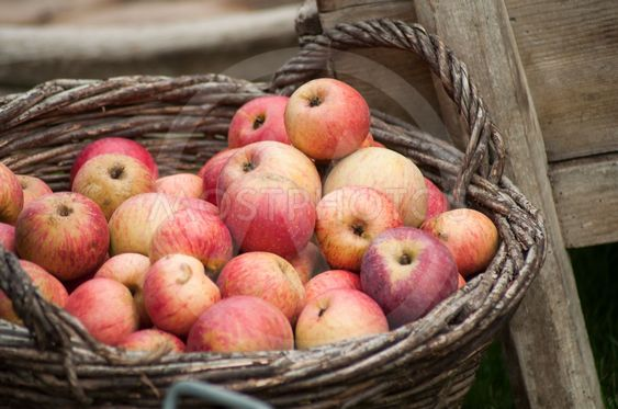organic red apple in a  wooden basket