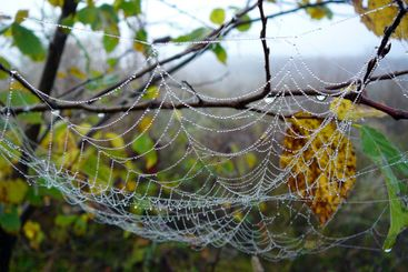 web with drops