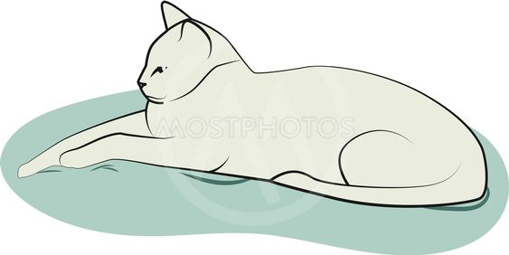 Cat on the pillow