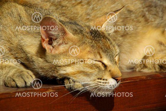 Katze - cat 12
