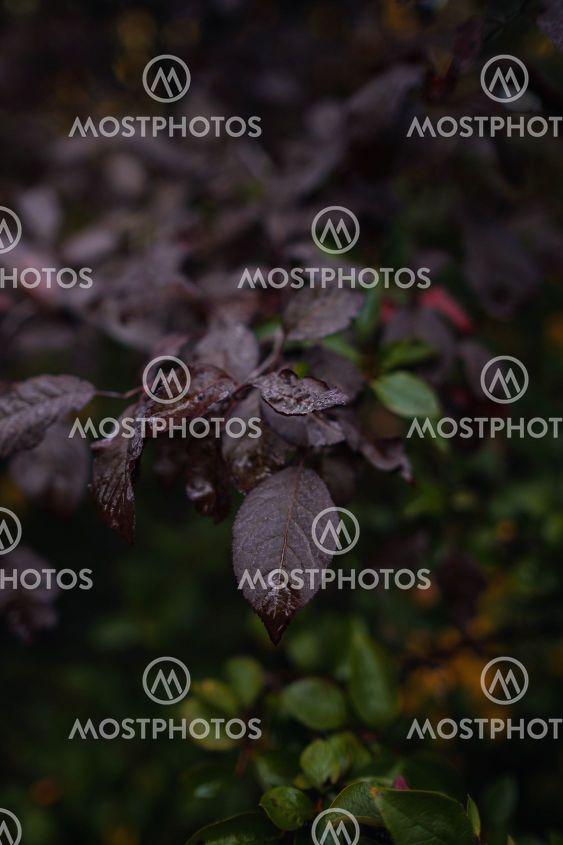 Close up image of orange autumn leaves at soft light.