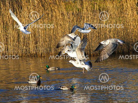 frightened gulls