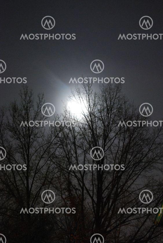 kuun valaistu puu