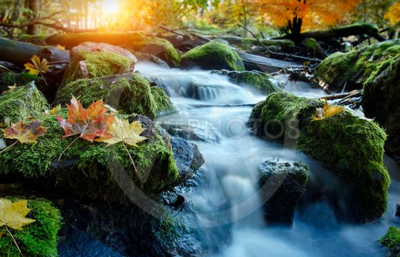 A river flows over rocks in autumn