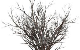 Dead tree bush by night - 3D render