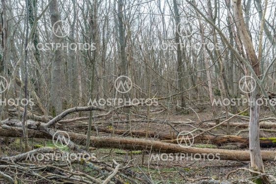 Fallna träd i Halltorps Hage på Öland