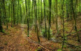 Forest landscape along the Neckarsteig long-distance...