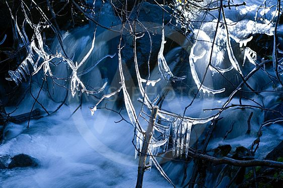 Isen på filialer