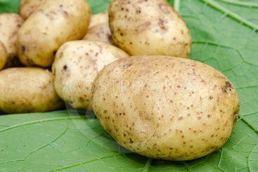Potatoes vegetables garden