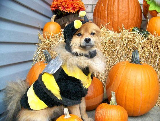 Buzzing By - To Wish You A Happy Howl-O-Ween