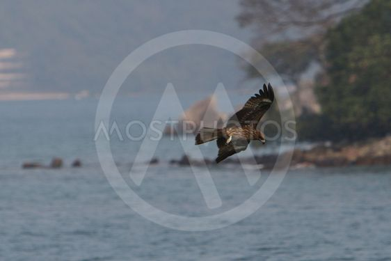 a wildlife of eagle