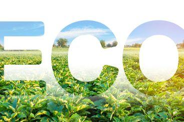 Eco inscription on the background of eggplant plantation...