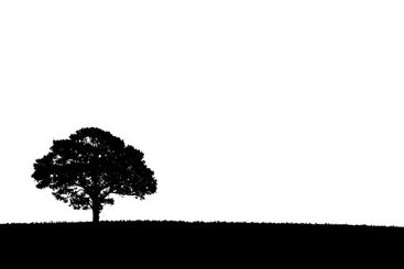 Silhouette of a single tree on a white background