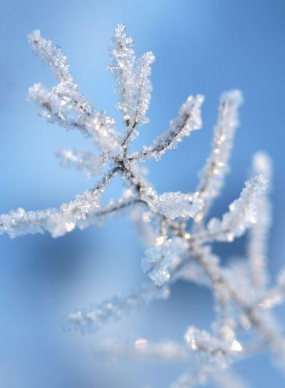 Chrystal Ice