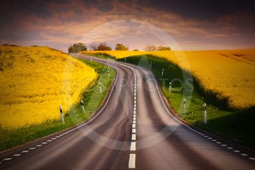 Yellow rapeseed field and a emty road