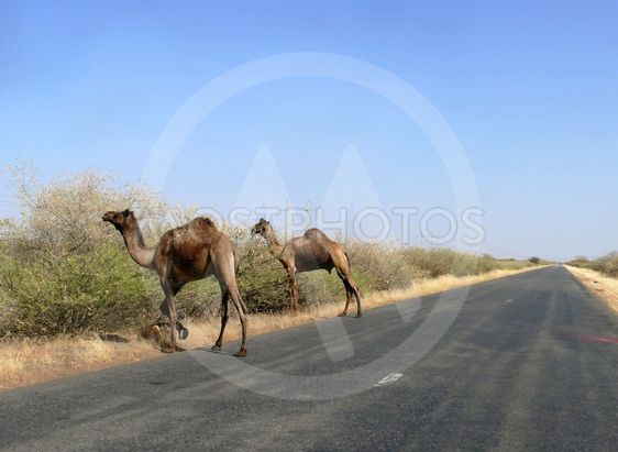 The road between Wadi Halfa and Khartoum.