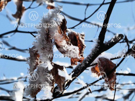 Blatt mit Schnee