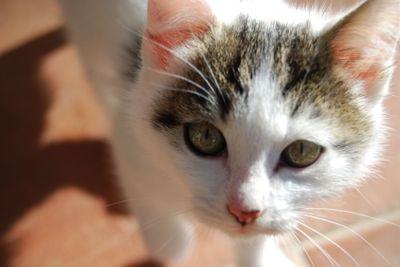 Eyes cat 2