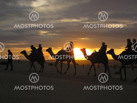 Auringonlaskun aikaan kamelin Safari