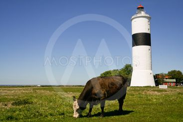 Lighthouse and cow