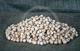 chickpea seeds,chickpea, gram