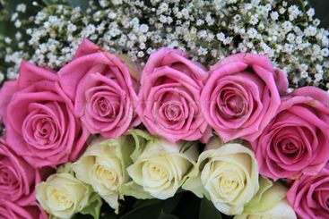 pink and white roses and gypsophila in flower arrangement
