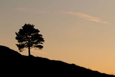 Silhouette of tree backlit
