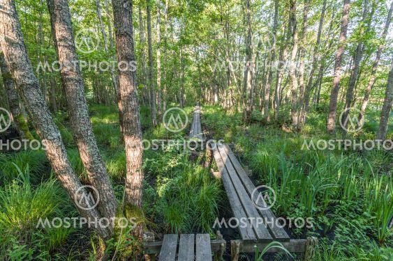 Bornsjöns naturreservat