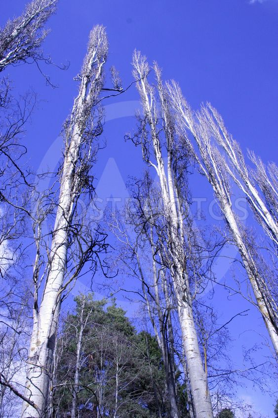 puu kuilut